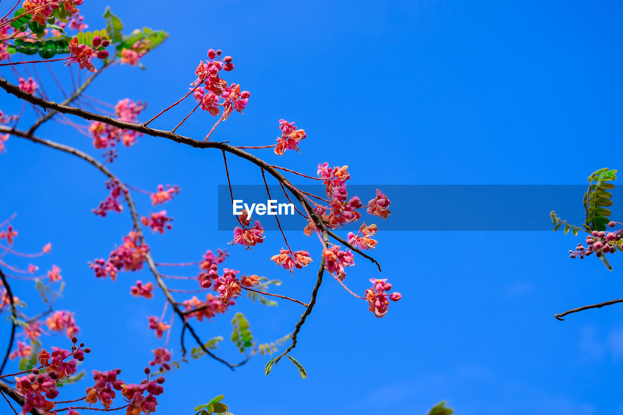 low angle view, sky, plant, growth, blue, tree, flowering plant, flower, branch, beauty in nature, nature, no people, day, freshness, fragility, clear sky, sunlight, vulnerability, blossom, outdoors, springtime, cherry blossom