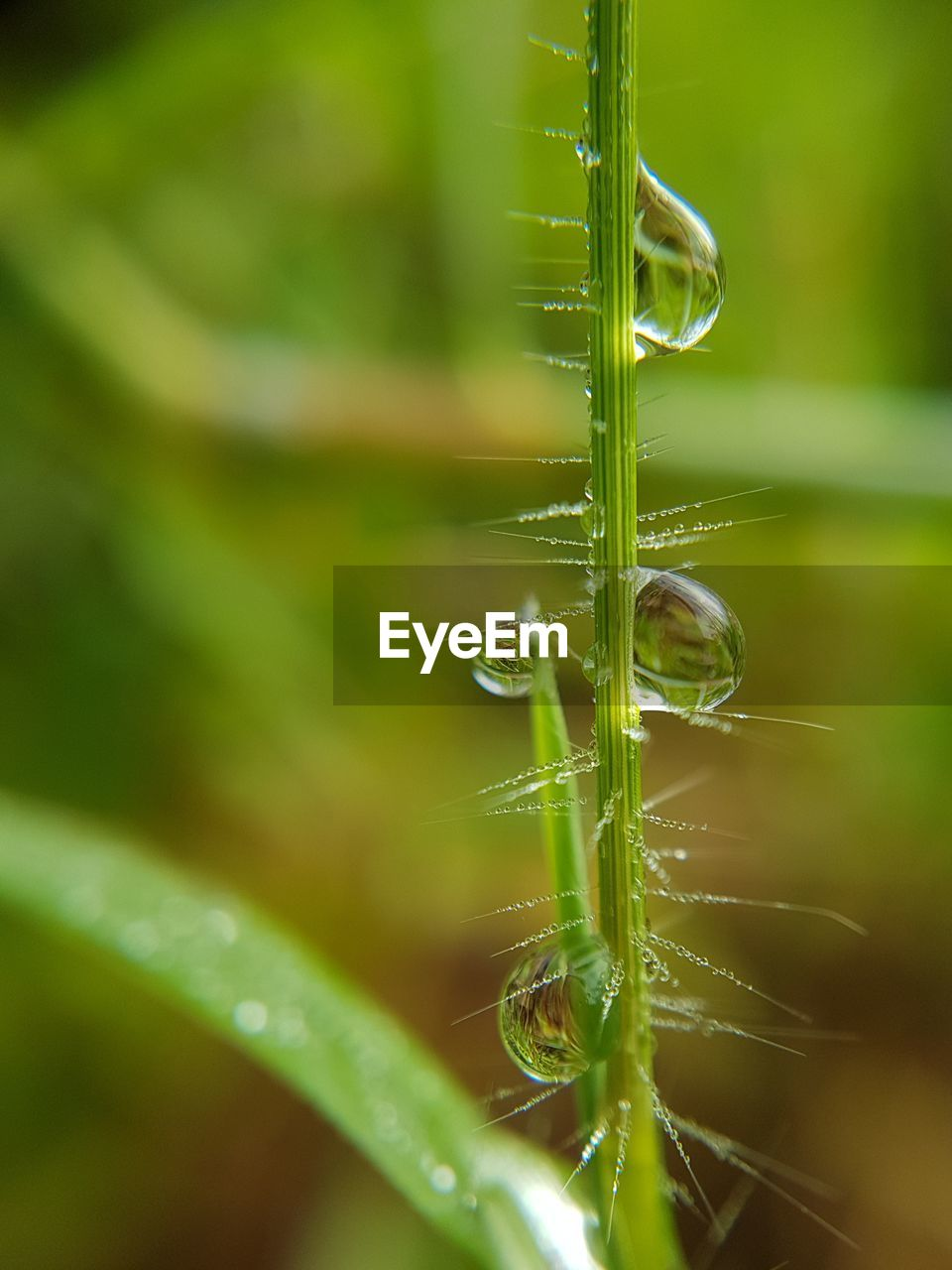 plant, green color, selective focus, growth, close-up, nature, beauty in nature, no people, drop, day, grass, freshness, vulnerability, water, fragility, plant part, wet, leaf, blade of grass, outdoors, purity, dew
