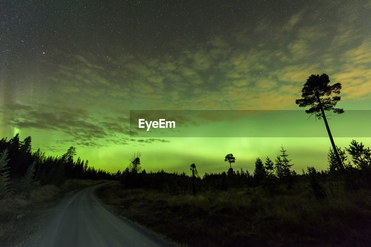 Road amidst silhouette trees with aurora sky