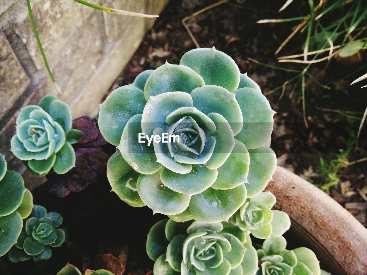 growth, plant, nature, no people, cactus, day, beauty in nature, outdoors, high angle view, green color, fragility, close-up, flower, freshness, flower head
