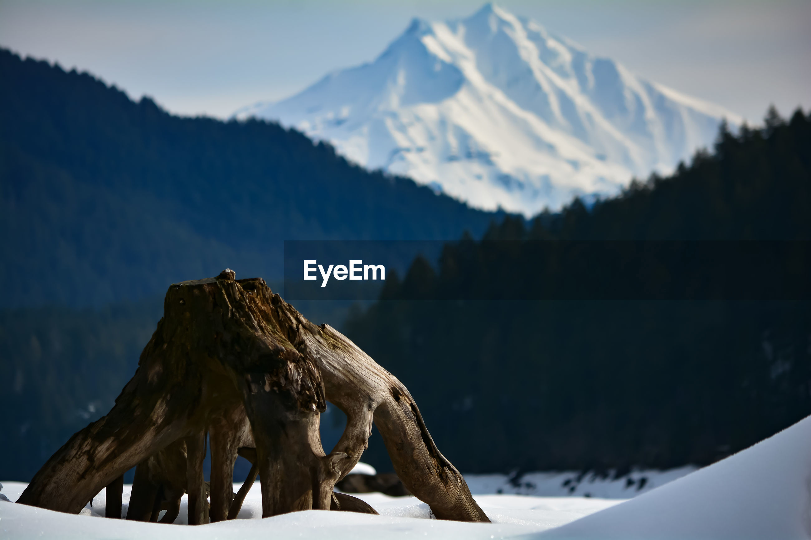 CLOSE-UP OF OWL AGAINST SNOWCAPPED MOUNTAINS