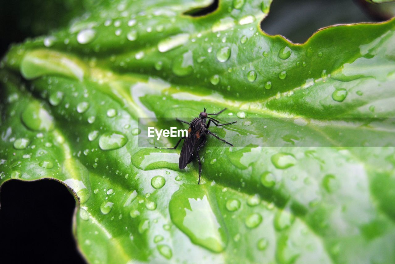 leaf, green color, insect, animal themes, one animal, animals in the wild, nature, drop, close-up, plant, no people, animal wildlife, water, growth, outdoors, day, beauty in nature, freshness