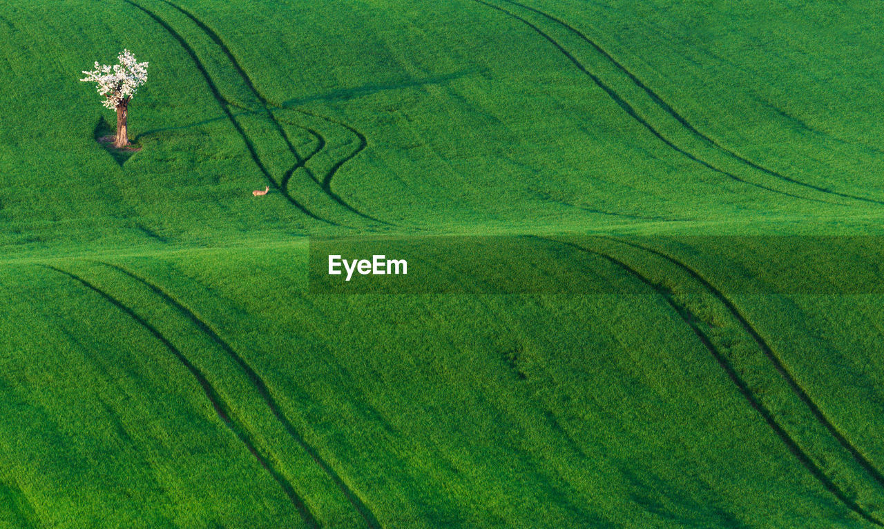 High Angle View Of Tree In Field