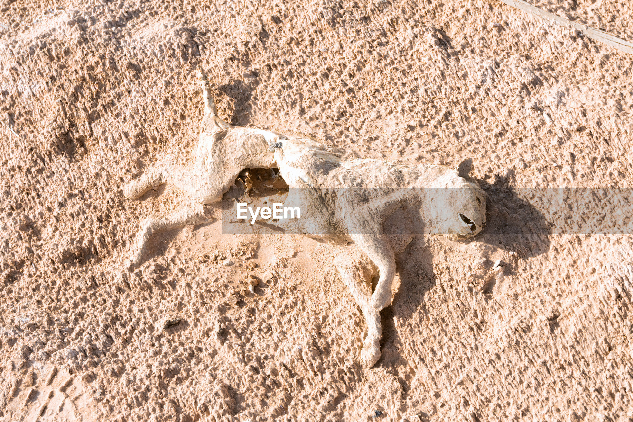 High angle view of dead animal in desert