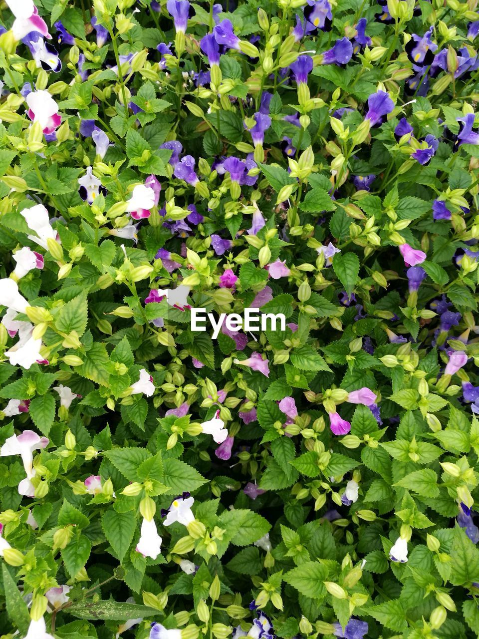 growth, leaf, plant, green color, nature, no people, beauty in nature, outdoors, day, flower, fragility, freshness, close-up, petunia