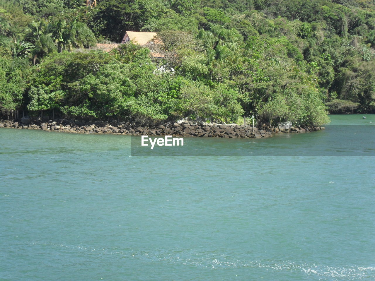 tree, water, nature, waterfront, sea, beauty in nature, no people, green color, day, outdoors, scenics, plant