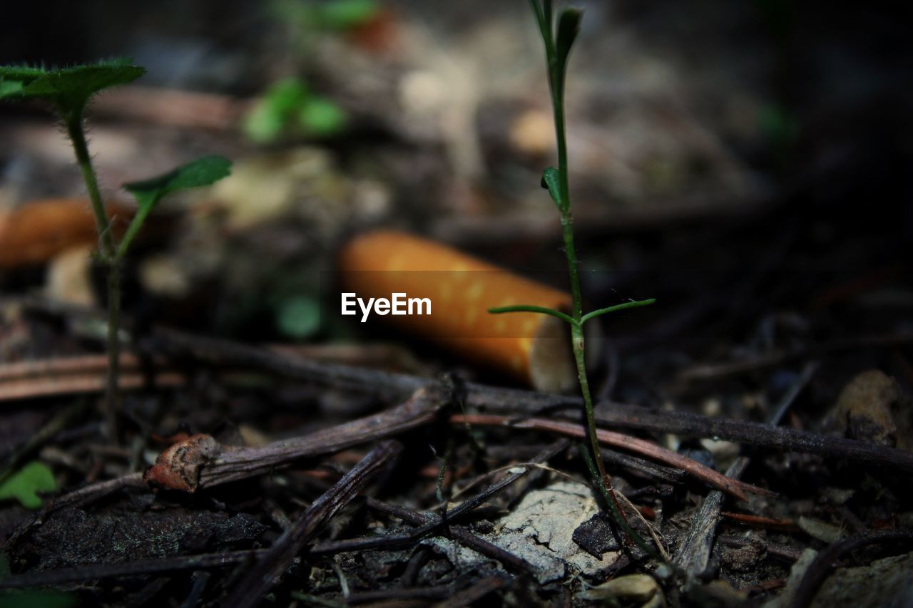 plant, close-up, nature, selective focus, no people, food, day, growth, field, land, focus on foreground, food and drink, outdoors, plant part, leaf, plant stem, twig, beauty in nature, vegetable, tree, stick - plant part