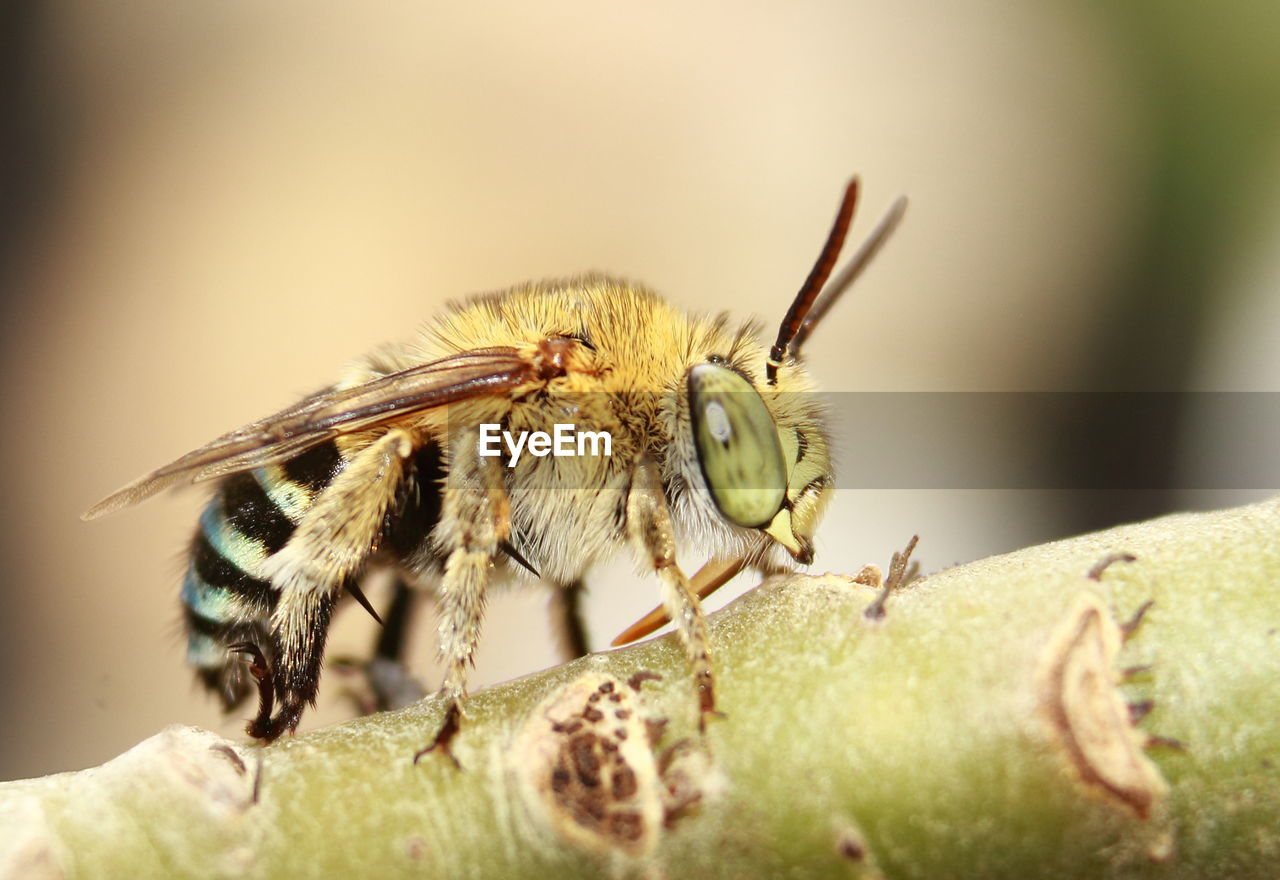 invertebrate, animal themes, insect, animals in the wild, animal wildlife, animal, one animal, close-up, selective focus, no people, bee, day, nature, plant, arthropod, green color, outdoors, beauty in nature, animal body part, yellow, animal eye