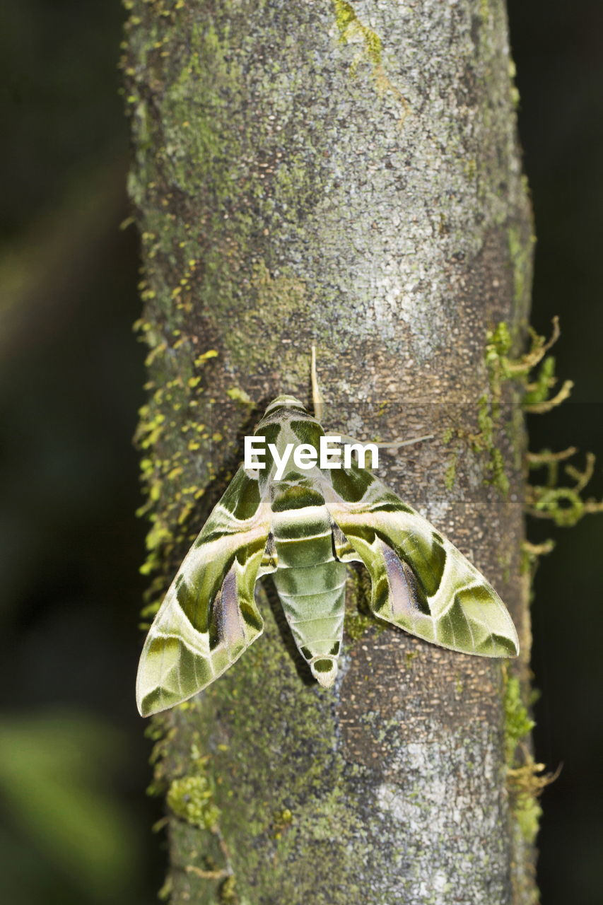 plant, tree trunk, trunk, close-up, animals in the wild, nature, focus on foreground, tree, no people, day, animal wildlife, green color, animal themes, animal, outdoors, growth, one animal, beauty in nature, invertebrate, insect