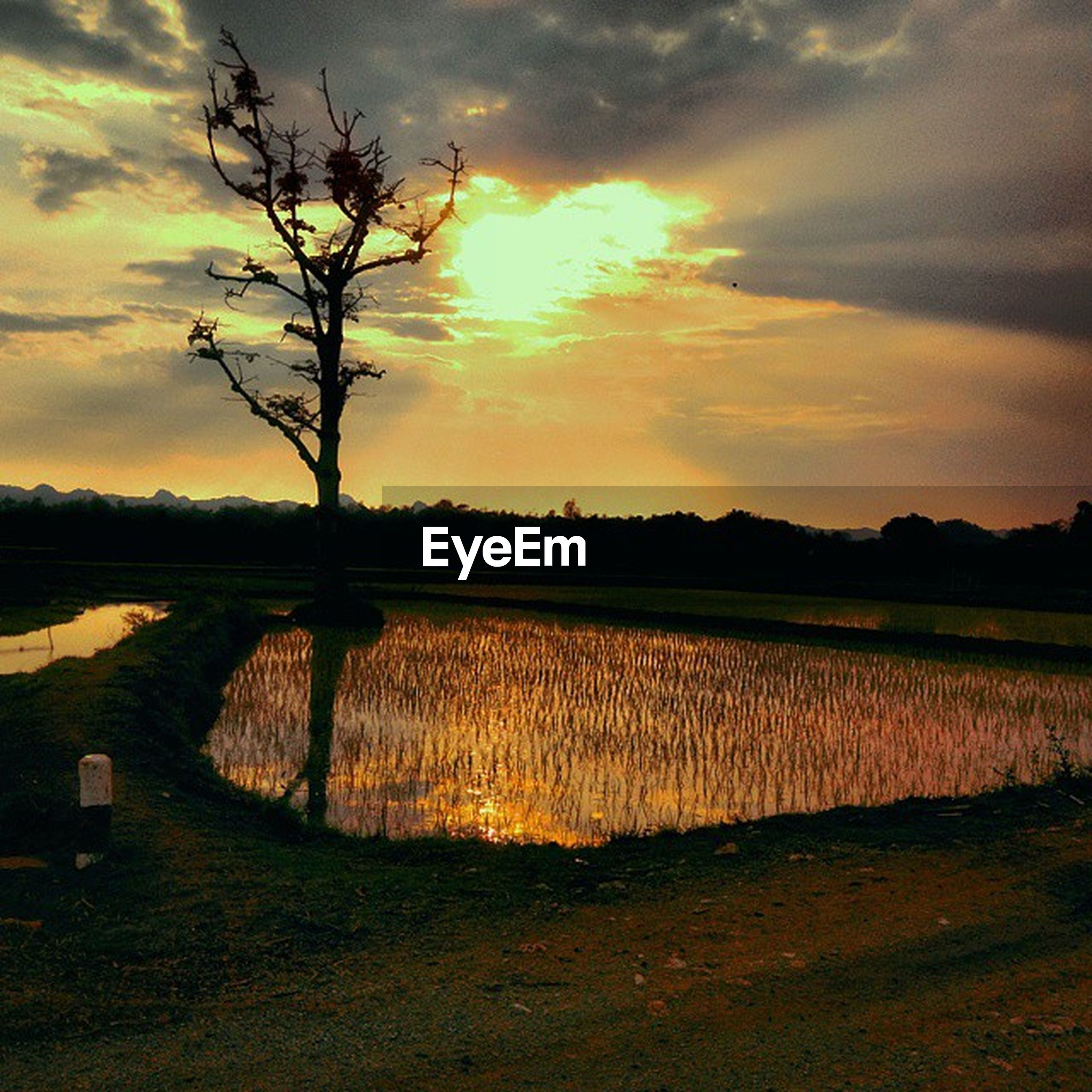sunset, sky, tranquil scene, tranquility, tree, scenics, landscape, cloud - sky, bare tree, beauty in nature, field, nature, orange color, silhouette, dramatic sky, idyllic, cloud, rural scene, cloudy, water