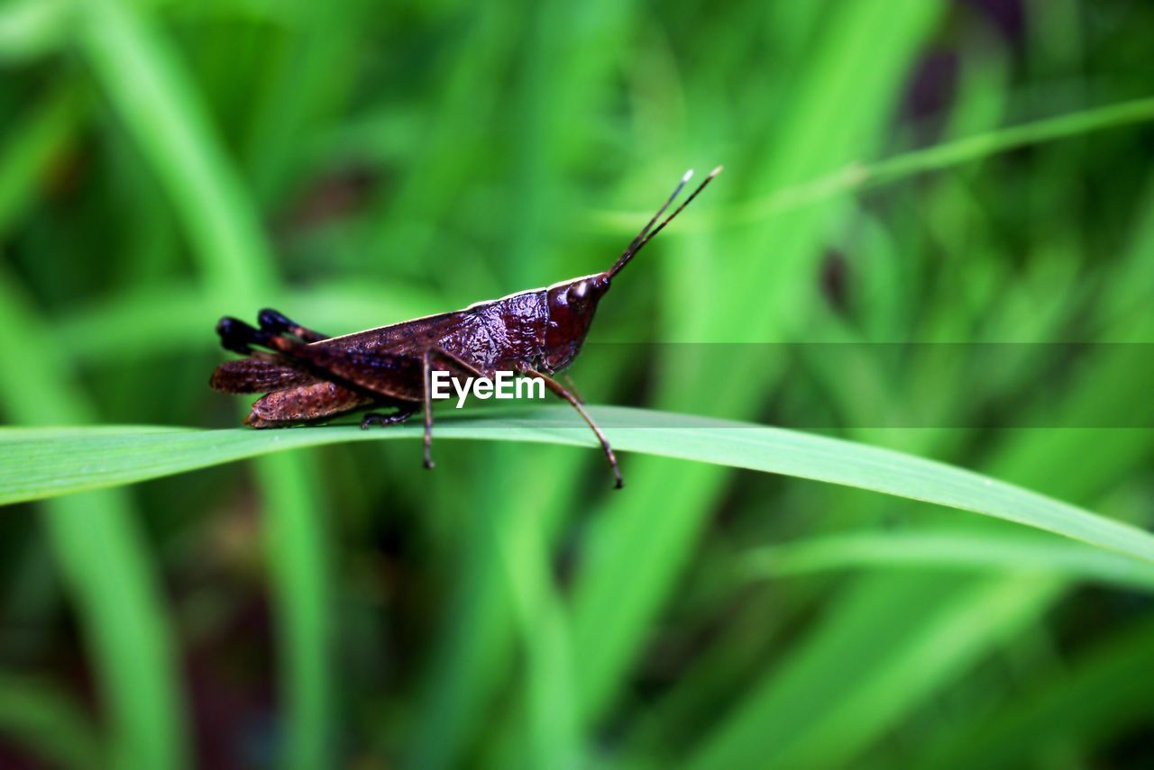 one animal, insect, animal themes, animals in the wild, wildlife, green color, plant, nature, no people, grass, outdoors, animal wildlife, growth, day, close-up, leaf, damselfly, full length