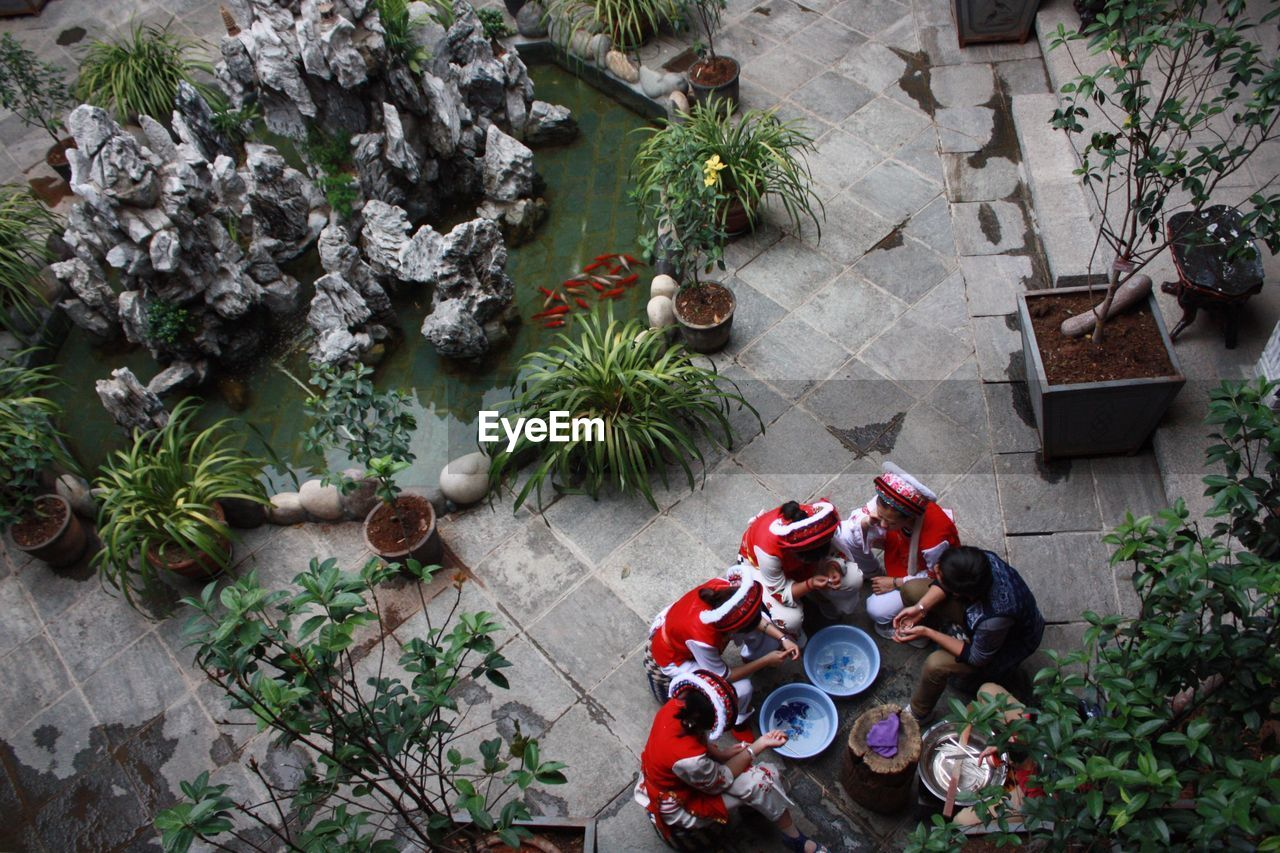 high angle view, potted plant, plant, directly above, growth, christmas tree, christmas decoration, day, no people, flower, tree, outdoors, sitting, nature