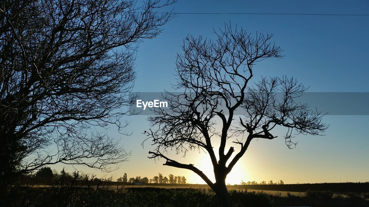 bare tree, tree, silhouette, nature, sunset, tranquility, beauty in nature, scenics, tranquil scene, outdoors, branch, sky, landscape, blue, no people, clear sky, day