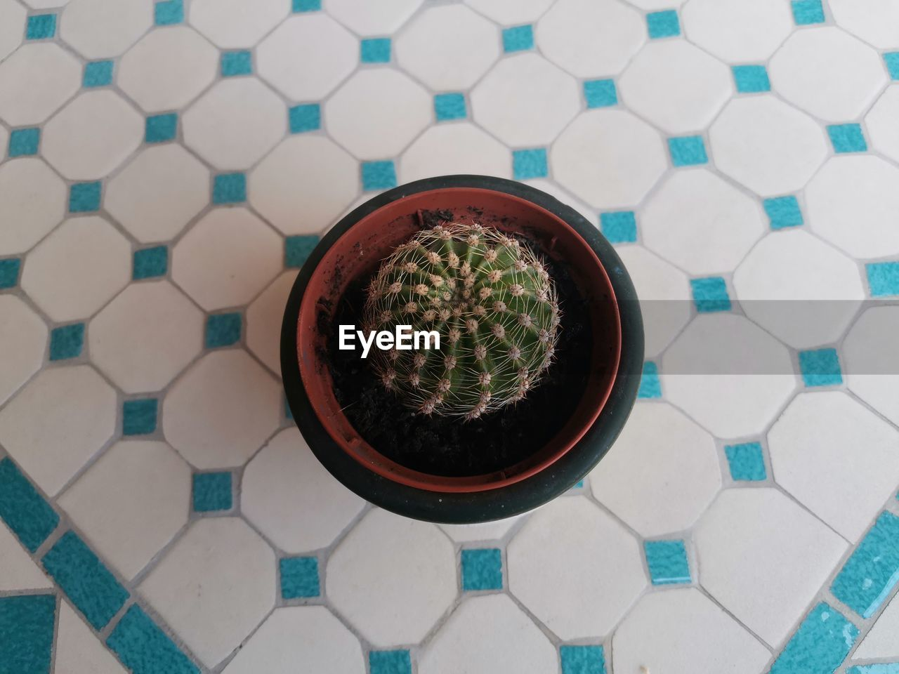 High angle view of succulent plant on floor