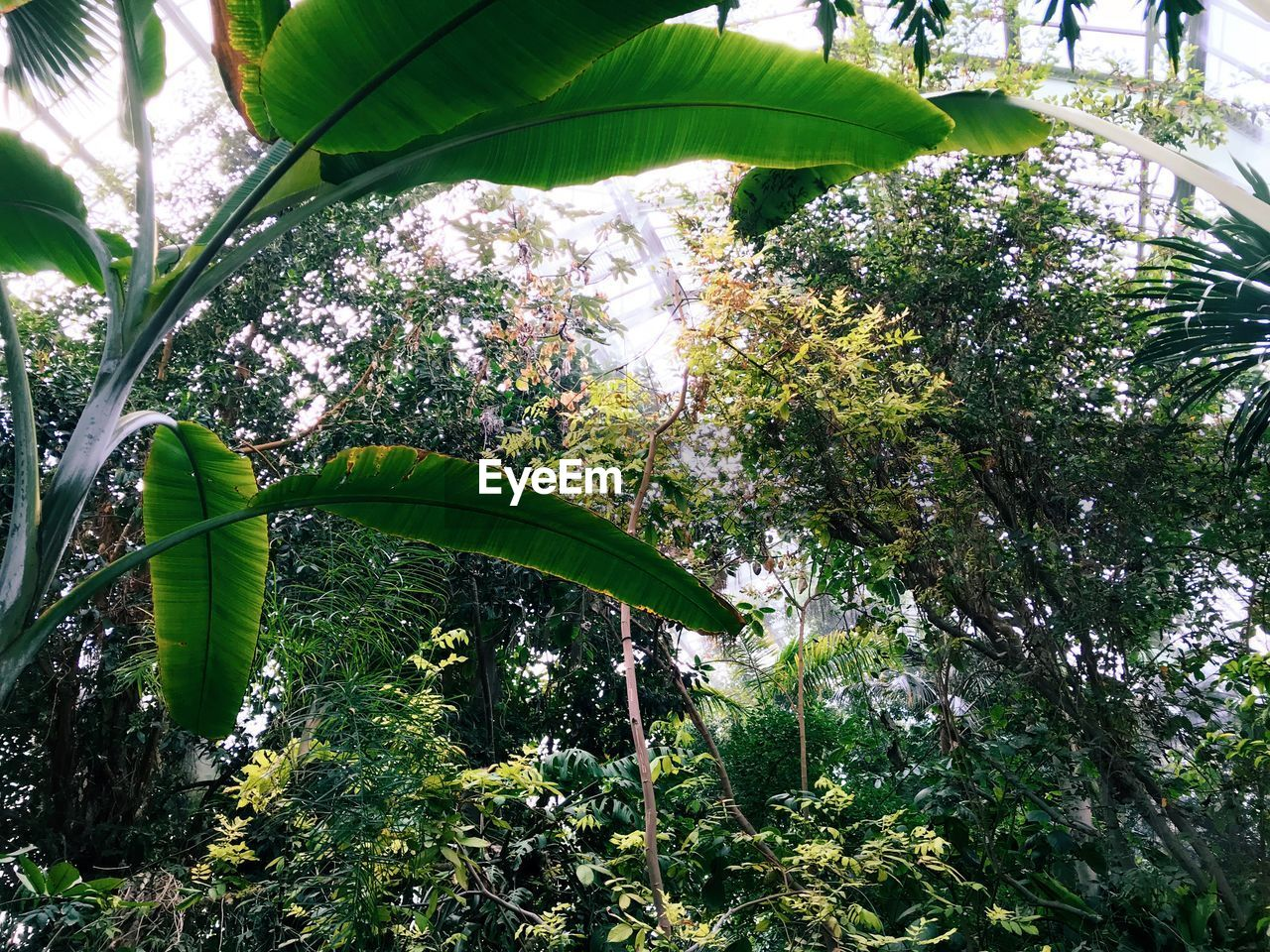 plant, tree, growth, green color, beauty in nature, leaf, plant part, nature, no people, day, low angle view, tranquility, outdoors, freshness, forest, close-up, banana, branch, banana tree, land