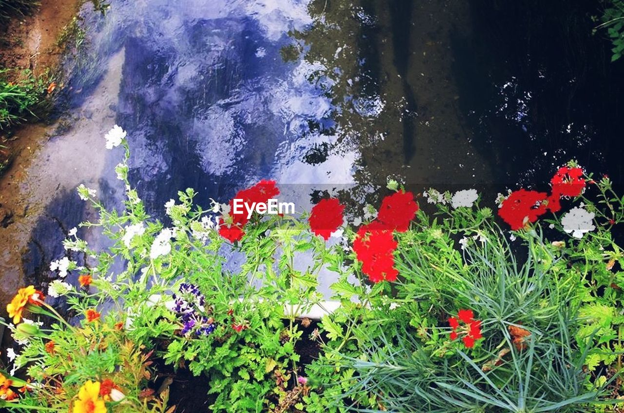 flower, nature, growth, water, plant, beauty in nature, high angle view, outdoors, day, no people, leaf, green color, lake, red, flower head, fragility, blooming, tree, freshness, close-up