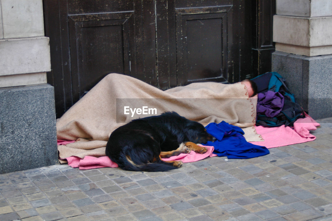 domestic, one animal, domestic animals, pets, mammal, vertebrate, relaxation, lying down, dog, canine, resting, sleeping, no people, day, architecture, built structure, entrance, social issues, whisker
