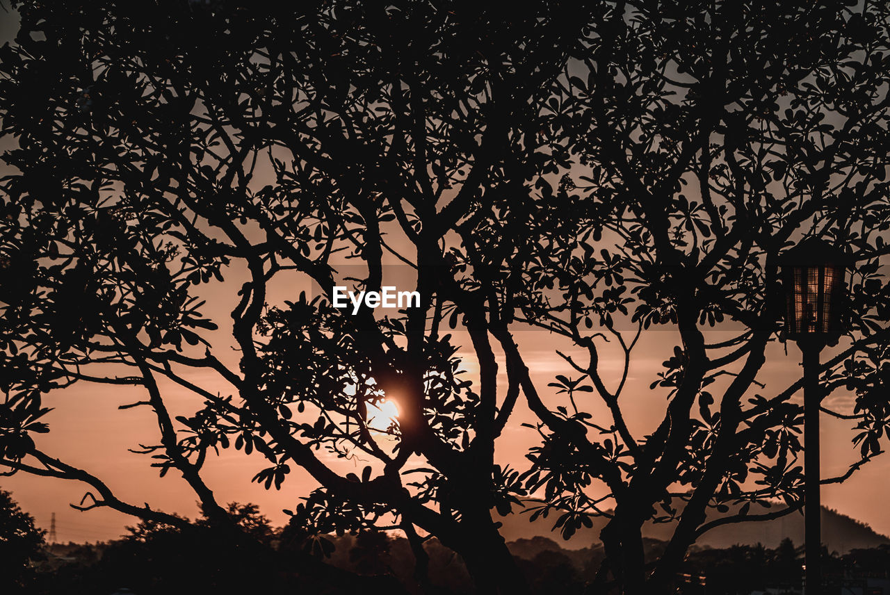 tree, plant, silhouette, growth, beauty in nature, sky, tranquility, nature, branch, low angle view, no people, sunset, tranquil scene, scenics - nature, outdoors, sunlight, idyllic, dusk, orange color, leaf