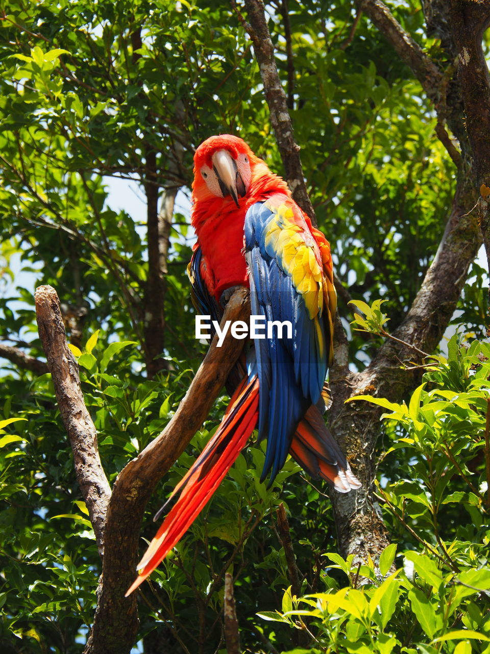 animal themes, tree, animal wildlife, animal, vertebrate, macaw, bird, animals in the wild, parrot, plant, branch, perching, scarlet macaw, nature, one animal, beauty in nature, no people, day, low angle view, outdoors