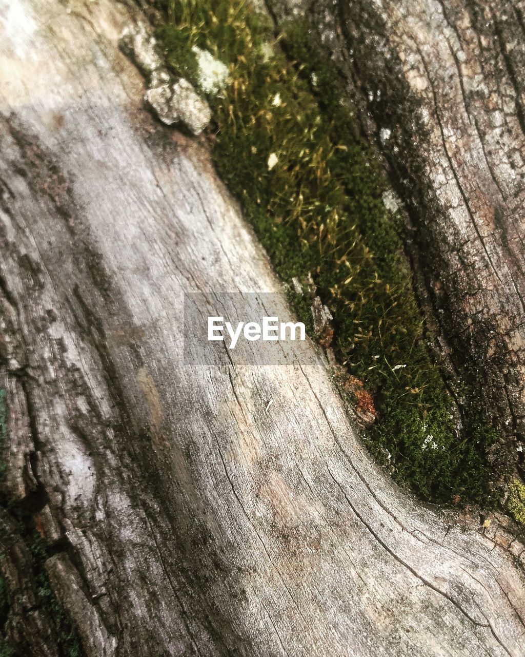 tree trunk, tree, textured, nature, wood - material, growth, bark, day, outdoors, close-up, rough, no people, moss, beauty in nature