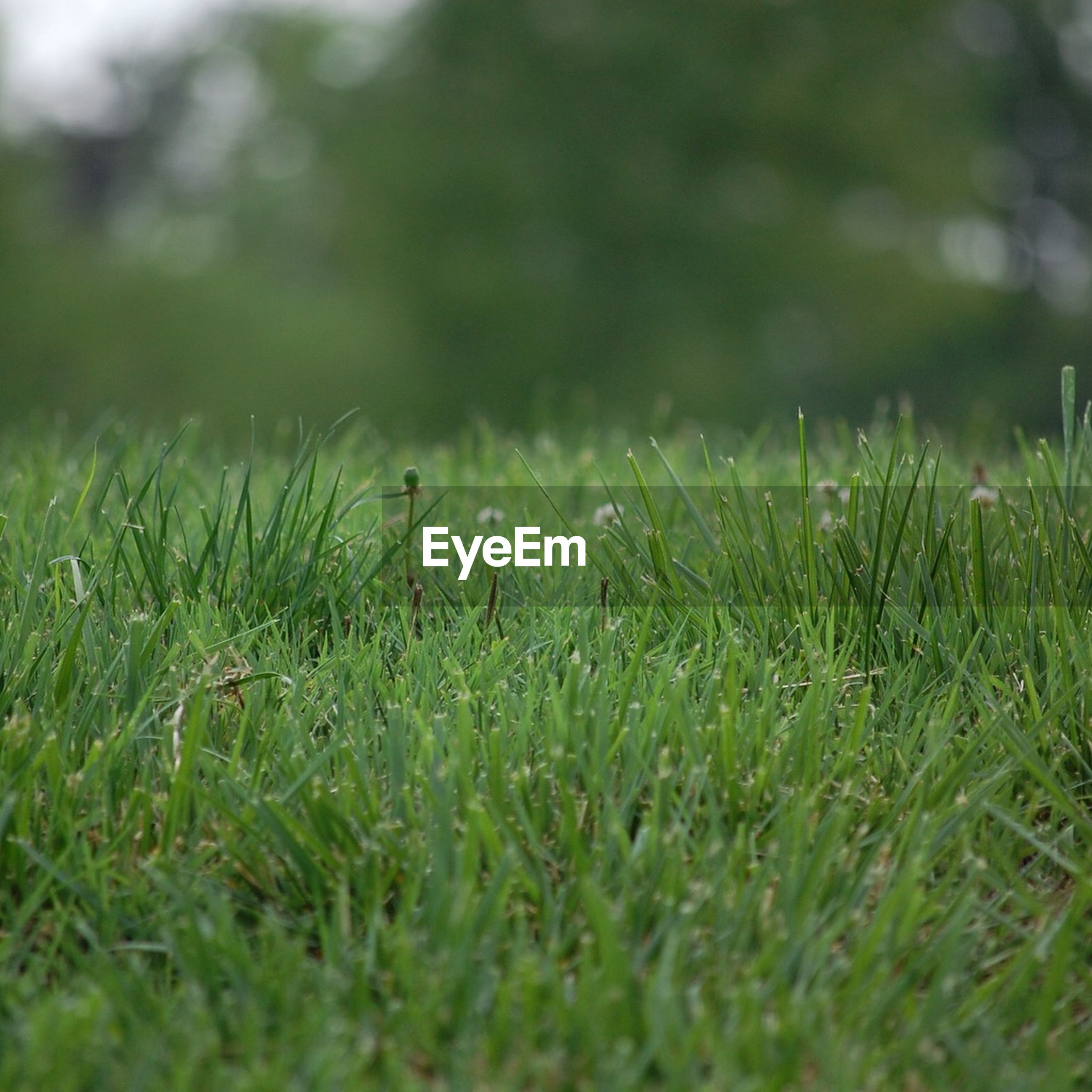 Surface level of grass in park