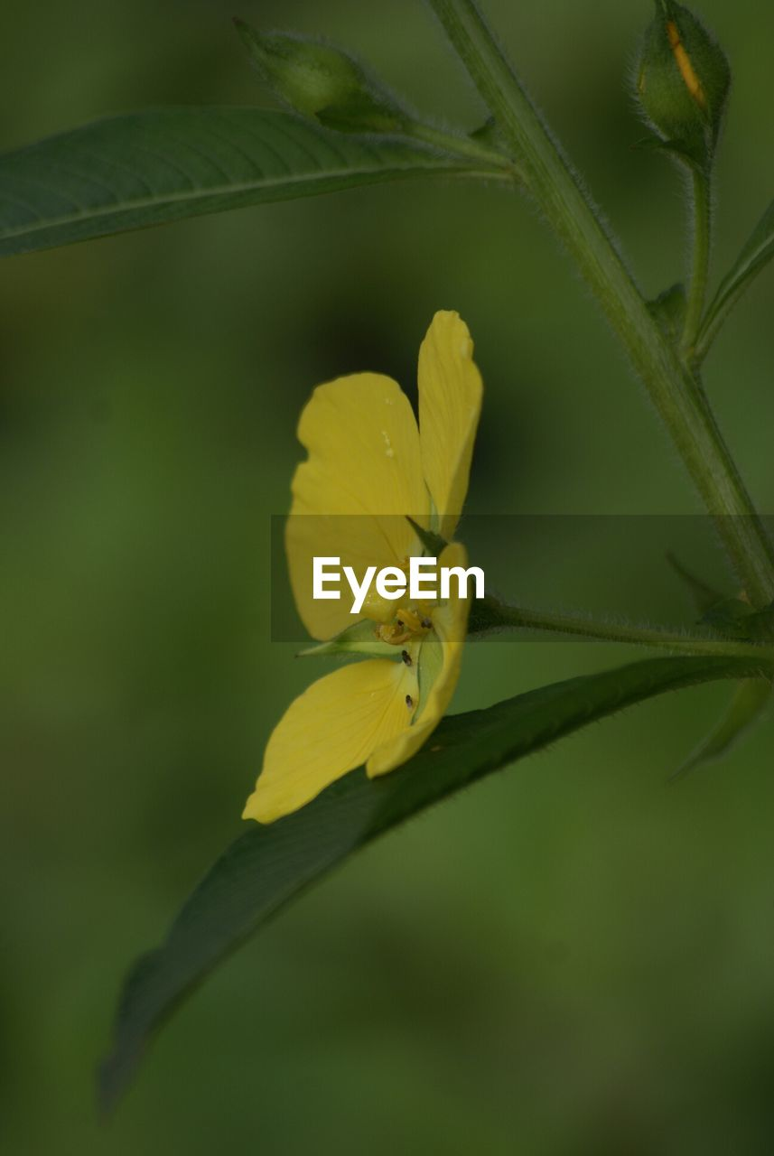 flower, insect, one animal, yellow, nature, animals in the wild, petal, animal themes, growth, fragility, plant, beauty in nature, animal wildlife, freshness, no people, outdoors, close-up, day, flower head, leaf, green color, bee, pollination