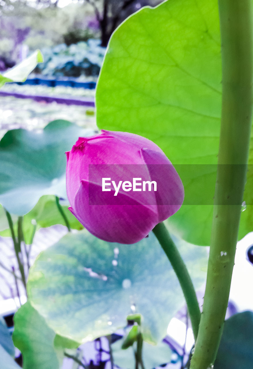 growth, beauty in nature, flower, petal, leaf, nature, plant, freshness, fragility, day, close-up, no people, blooming, purple, focus on foreground, outdoors, flower head