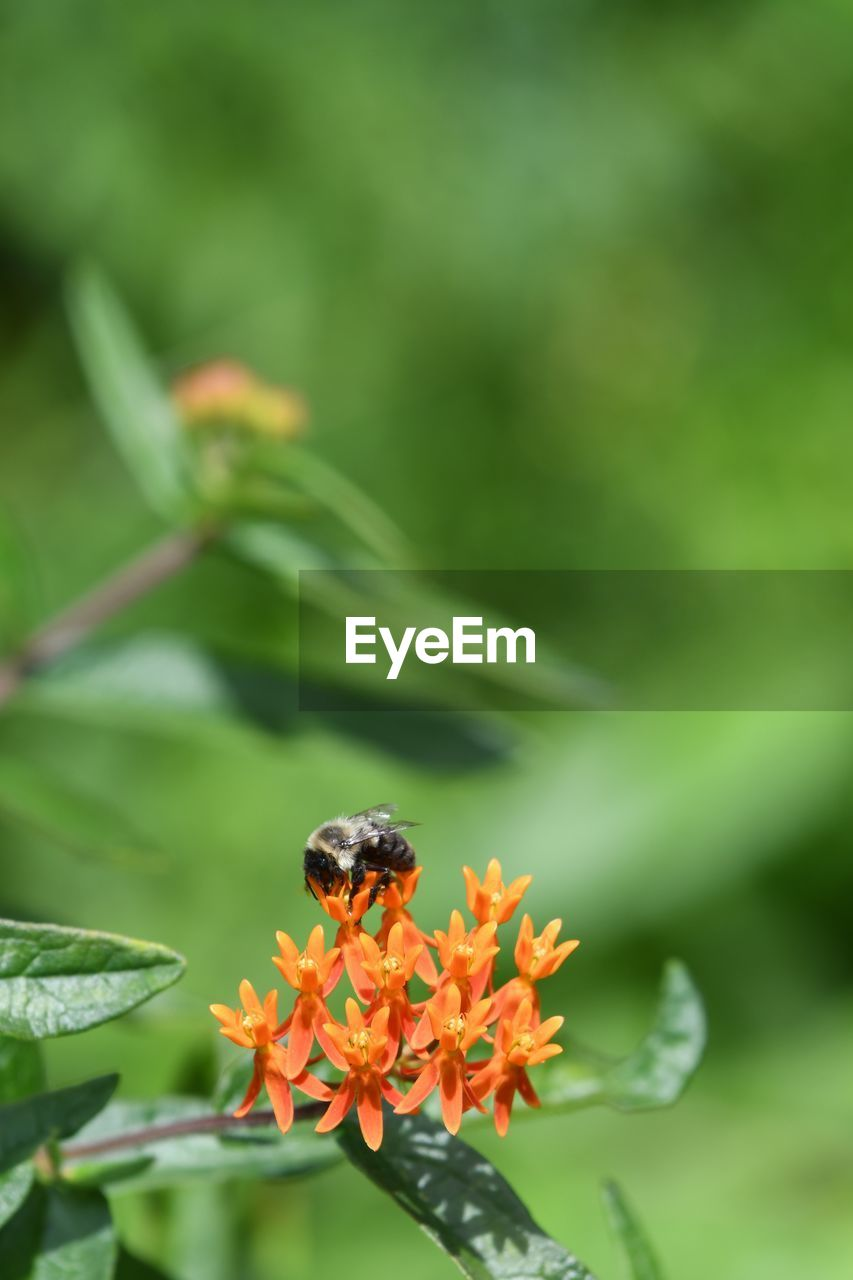 flowering plant, flower, invertebrate, fragility, insect, freshness, animal wildlife, plant, beauty in nature, growth, animal themes, vulnerability, one animal, petal, animal, close-up, flower head, animals in the wild, orange color, focus on foreground, no people, pollination