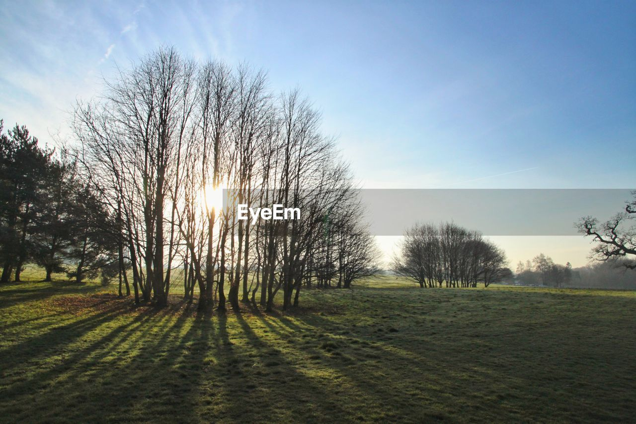 sky, tree, plant, grass, tranquility, tranquil scene, landscape, scenics - nature, nature, no people, environment, beauty in nature, field, land, sunlight, bare tree, day, non-urban scene, sun, outdoors, lens flare