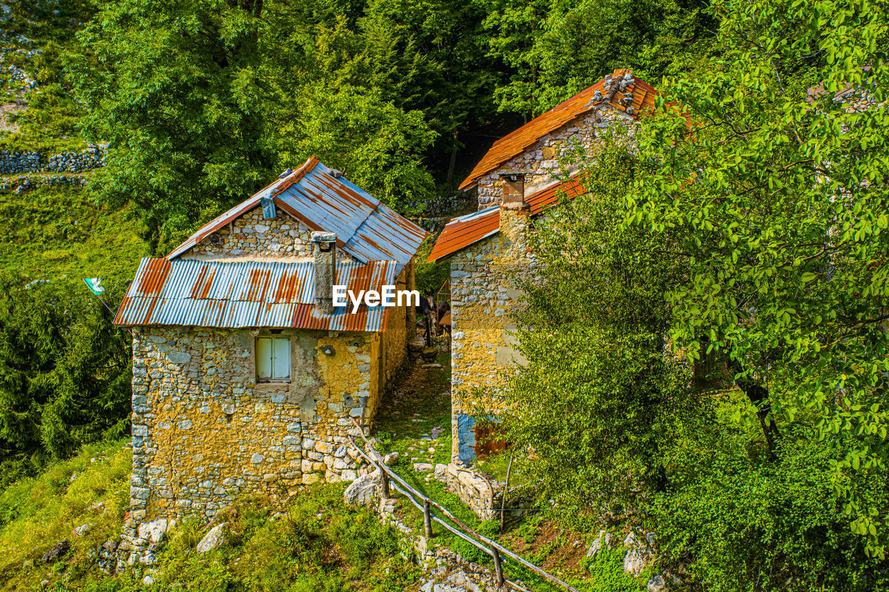 plant, tree, built structure, architecture, house, building exterior, green color, building, forest, nature, land, no people, growth, day, wood - material, residential district, outdoors, lush foliage, foliage, rural scene
