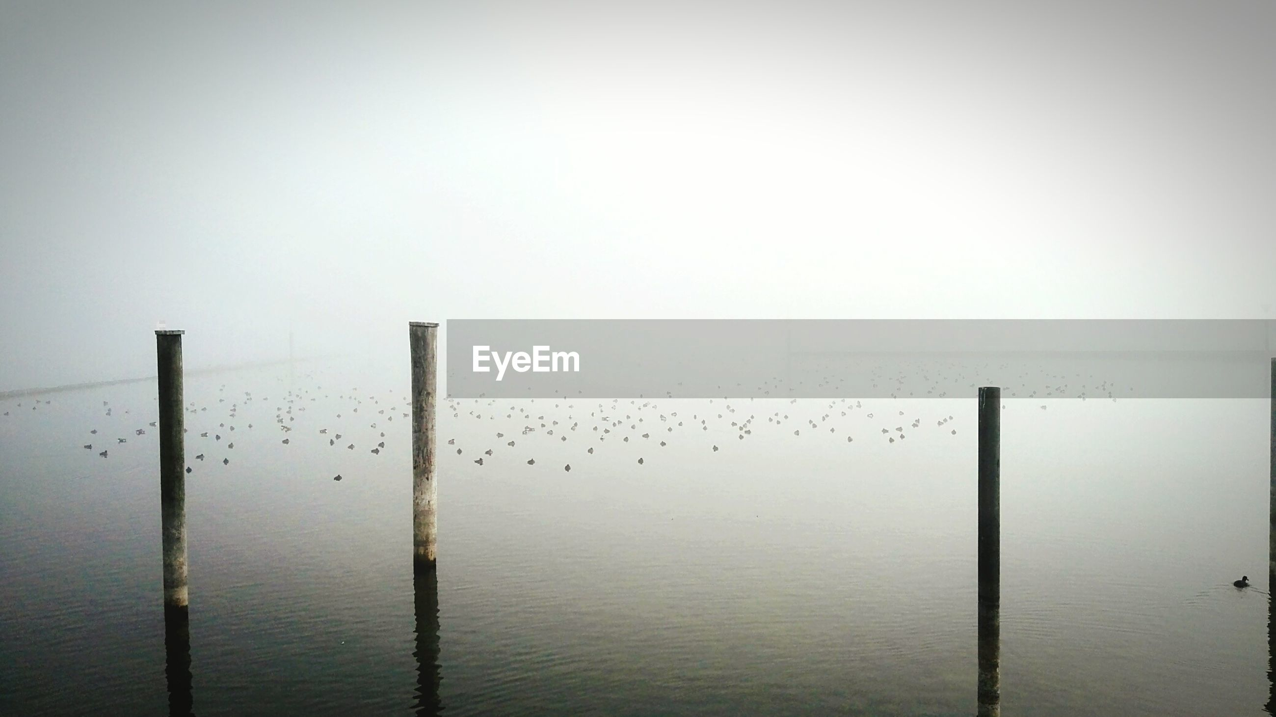 Wooden posts in river against sky during foggy weather