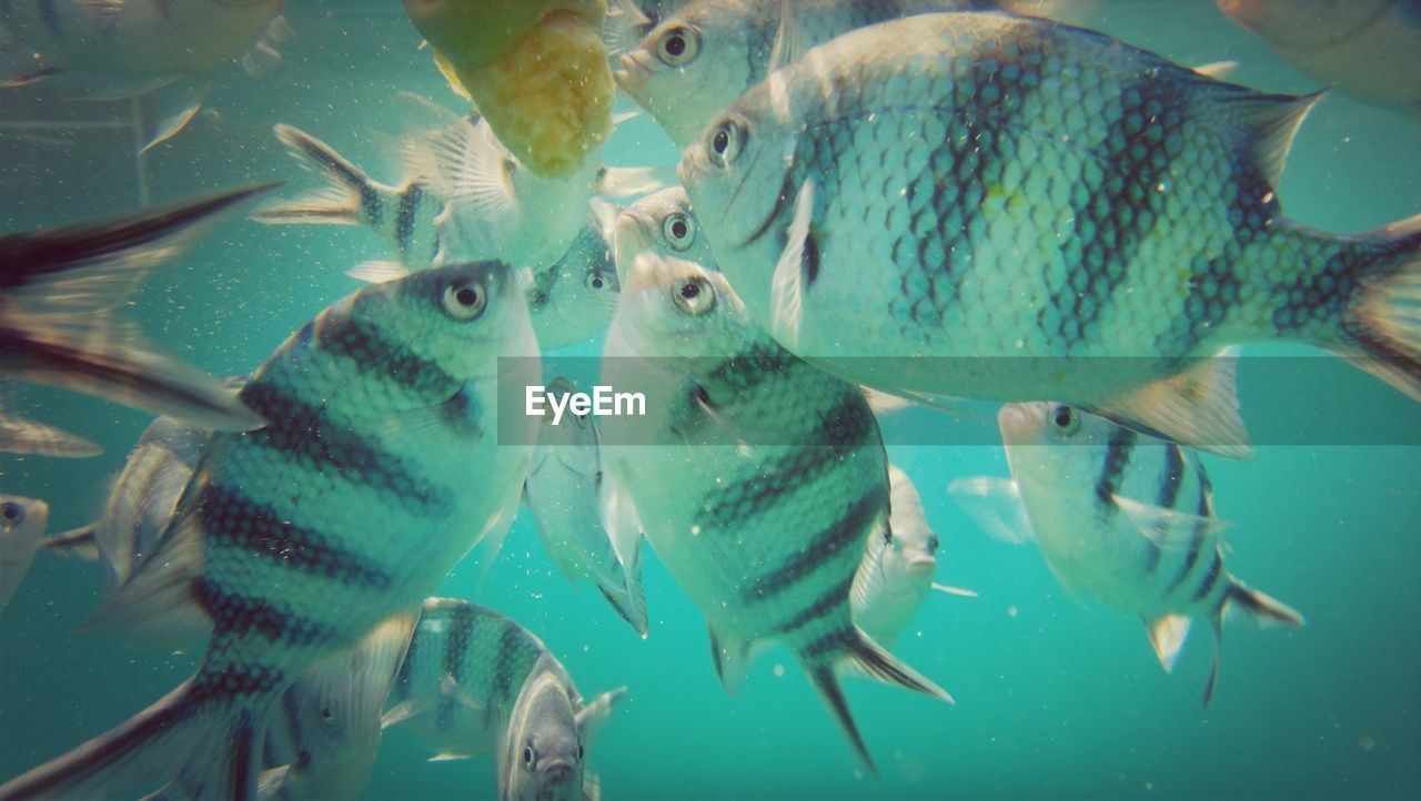 Close-up of fish feeding underwater