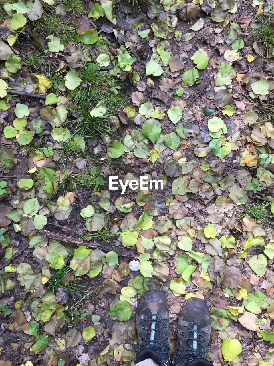 low section, shoe, human leg, body part, human body part, leaf, one person, real people, plant part, standing, personal perspective, lifestyles, high angle view, day, nature, unrecognizable person, directly above, leisure activity, plant, human foot, outdoors, leaves, human limb, change