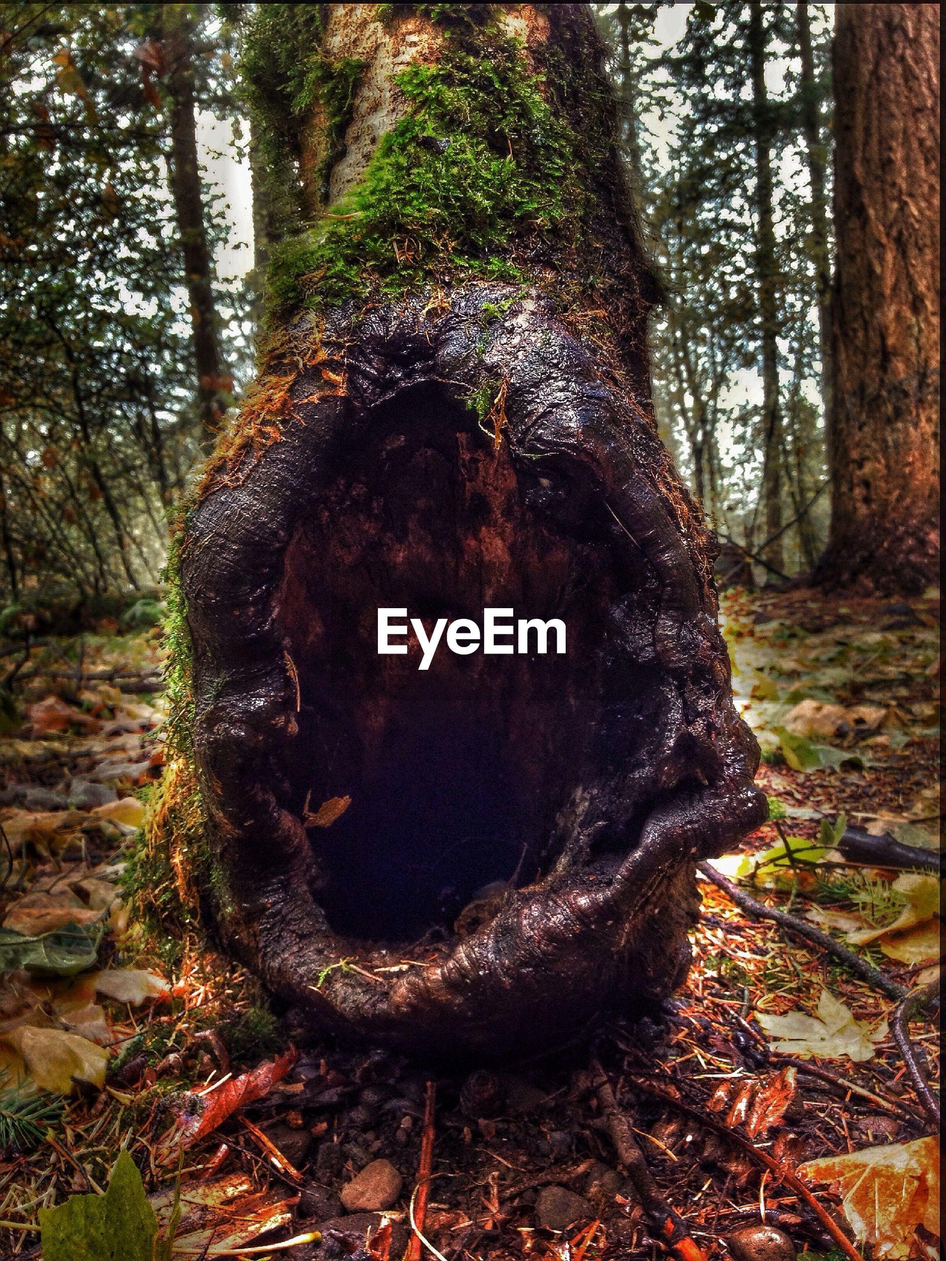 Close-up of hole on tree