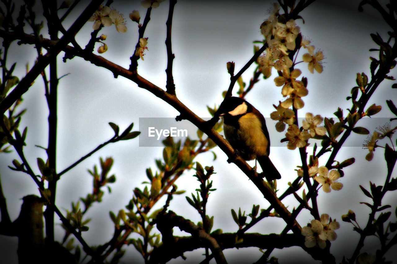 tree, branch, one animal, nature, no people, animal themes, bird, animals in the wild, beauty in nature, day, outdoors, growth, perching, low angle view, close-up, sky
