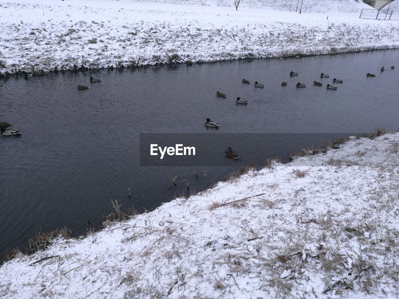 animal themes, animals in the wild, water, nature, winter, cold temperature, bird, no people, day, animal wildlife, outdoors, high angle view, lake, snow, large group of animals, beauty in nature, frozen, scenics, swimming, swan, mammal