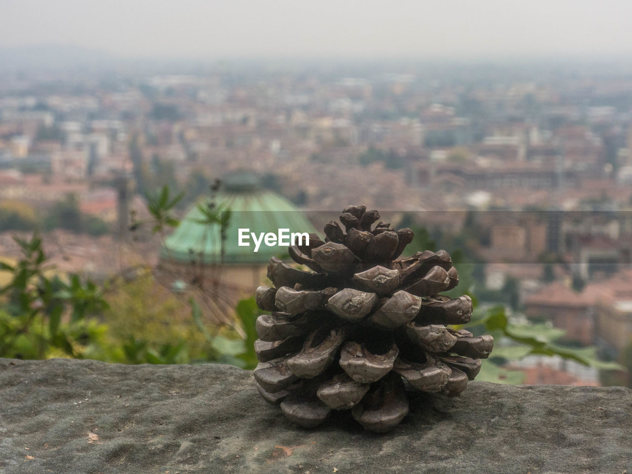 city, architecture, building exterior, focus on foreground, built structure, nature, no people, cityscape, sky, day, building, close-up, outdoors, plant, pine cone, green color, growth, tree, landscape, pattern, coniferous tree