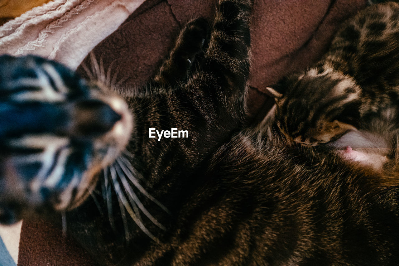 Close-Up Of Cat Feeding Kitten