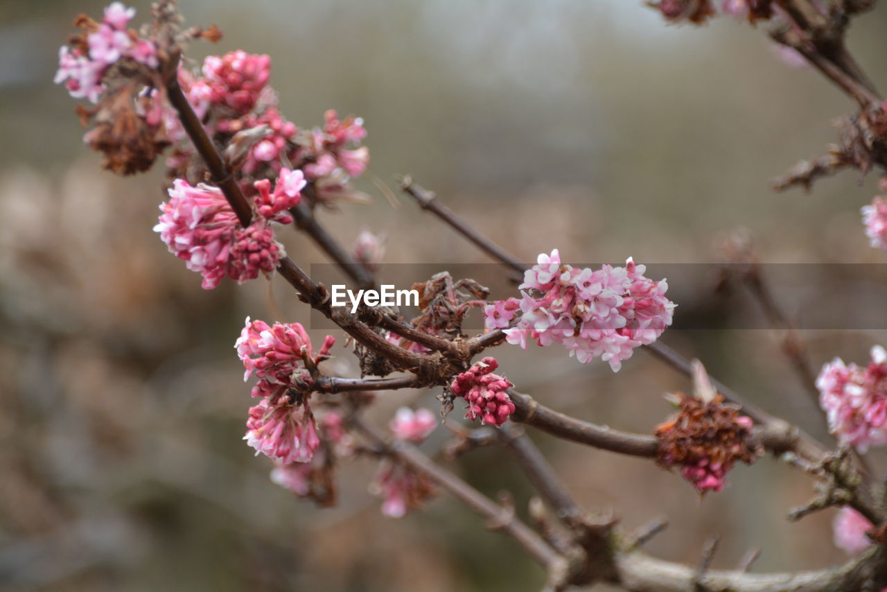 flower, fragility, pink color, nature, growth, beauty in nature, day, freshness, blossom, one animal, animals in the wild, branch, petal, no people, outdoors, springtime, focus on foreground, close-up, insect, animal themes, flower head, plum blossom, tree, pollination