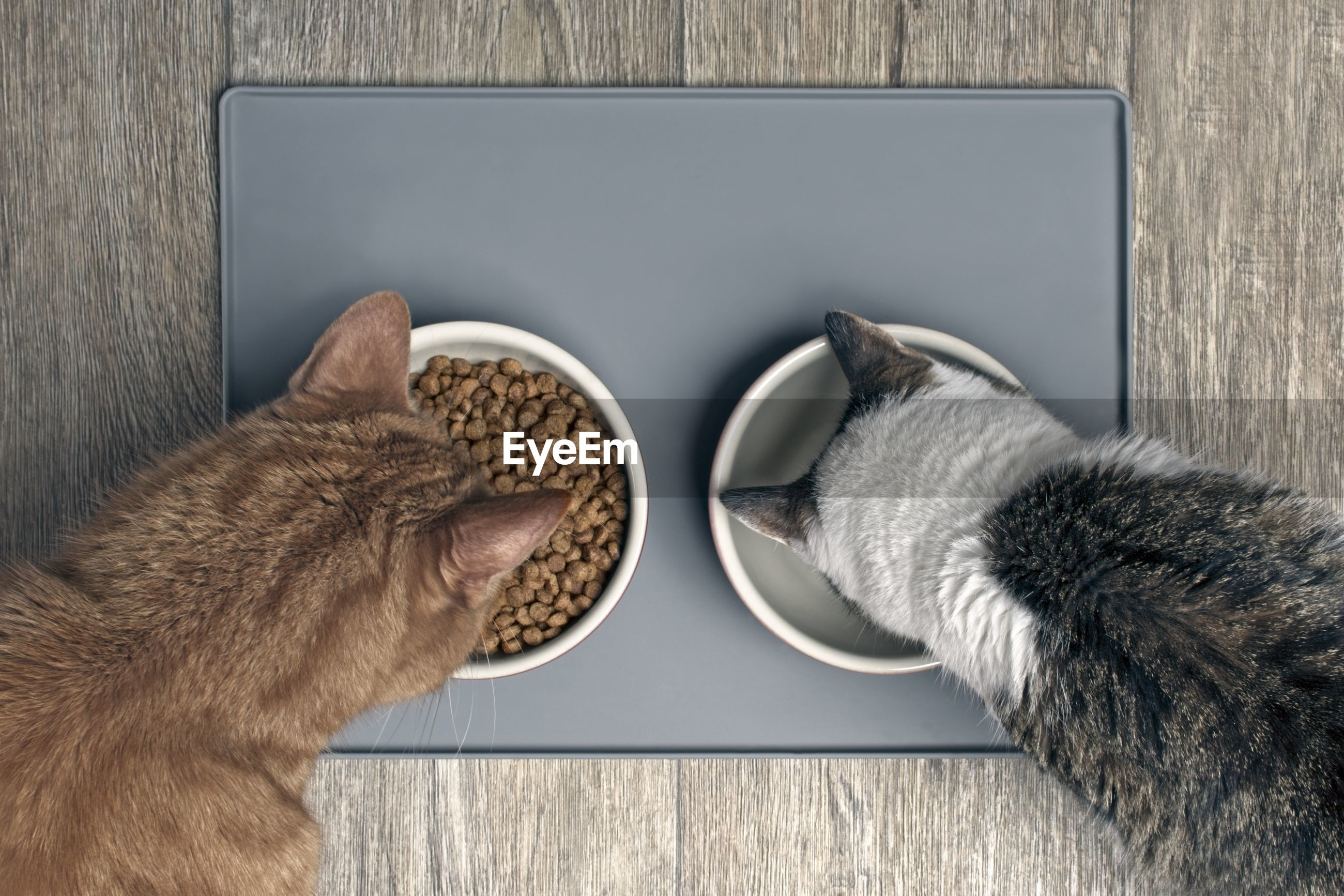 Looking down at two cats eating from a bowl.