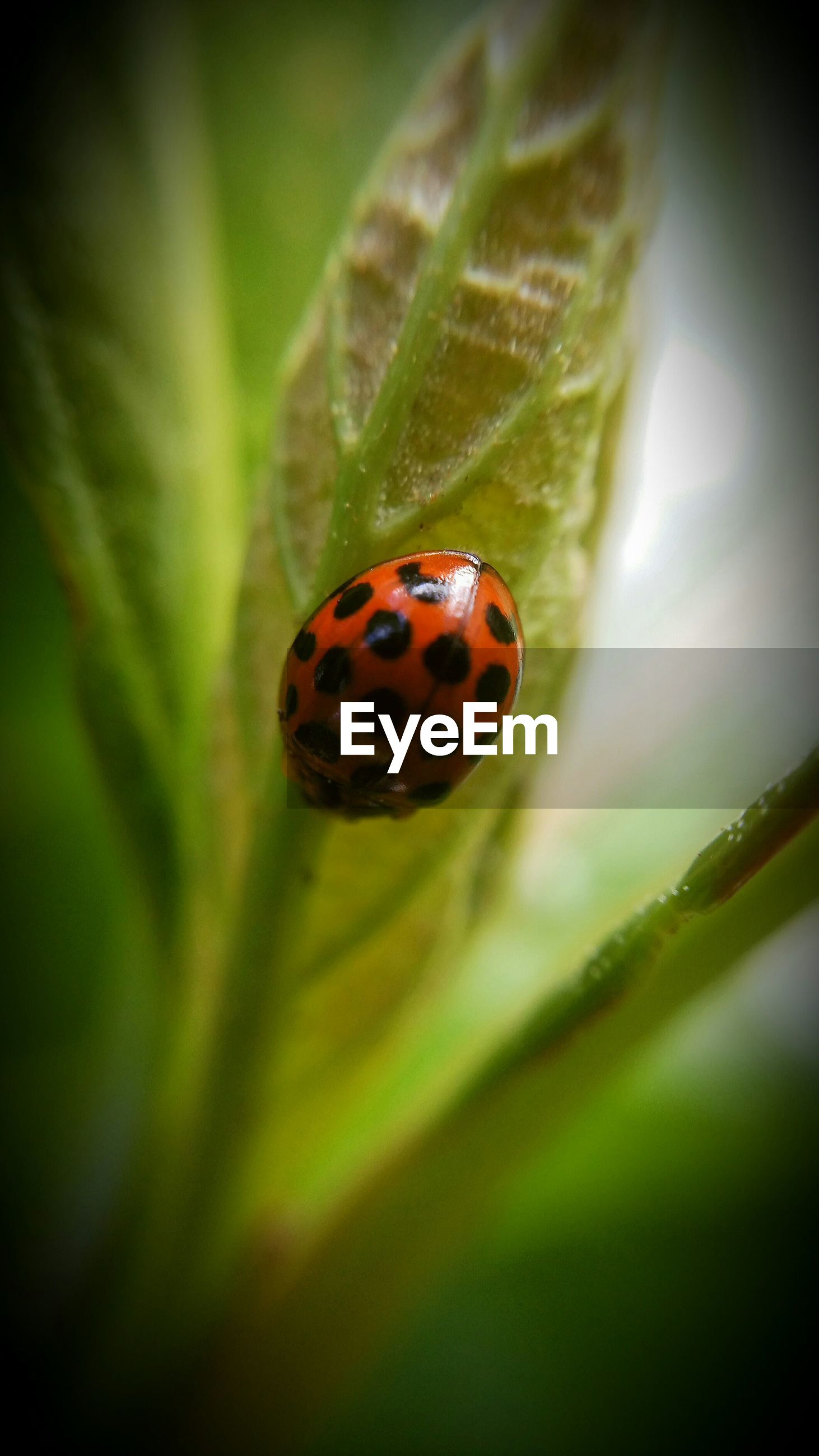 insect, one animal, animal themes, ladybug, animals in the wild, wildlife, green color, leaf, close-up, spotted, selective focus, plant, focus on foreground, nature, red, beauty in nature, growth, day, outdoors, no people