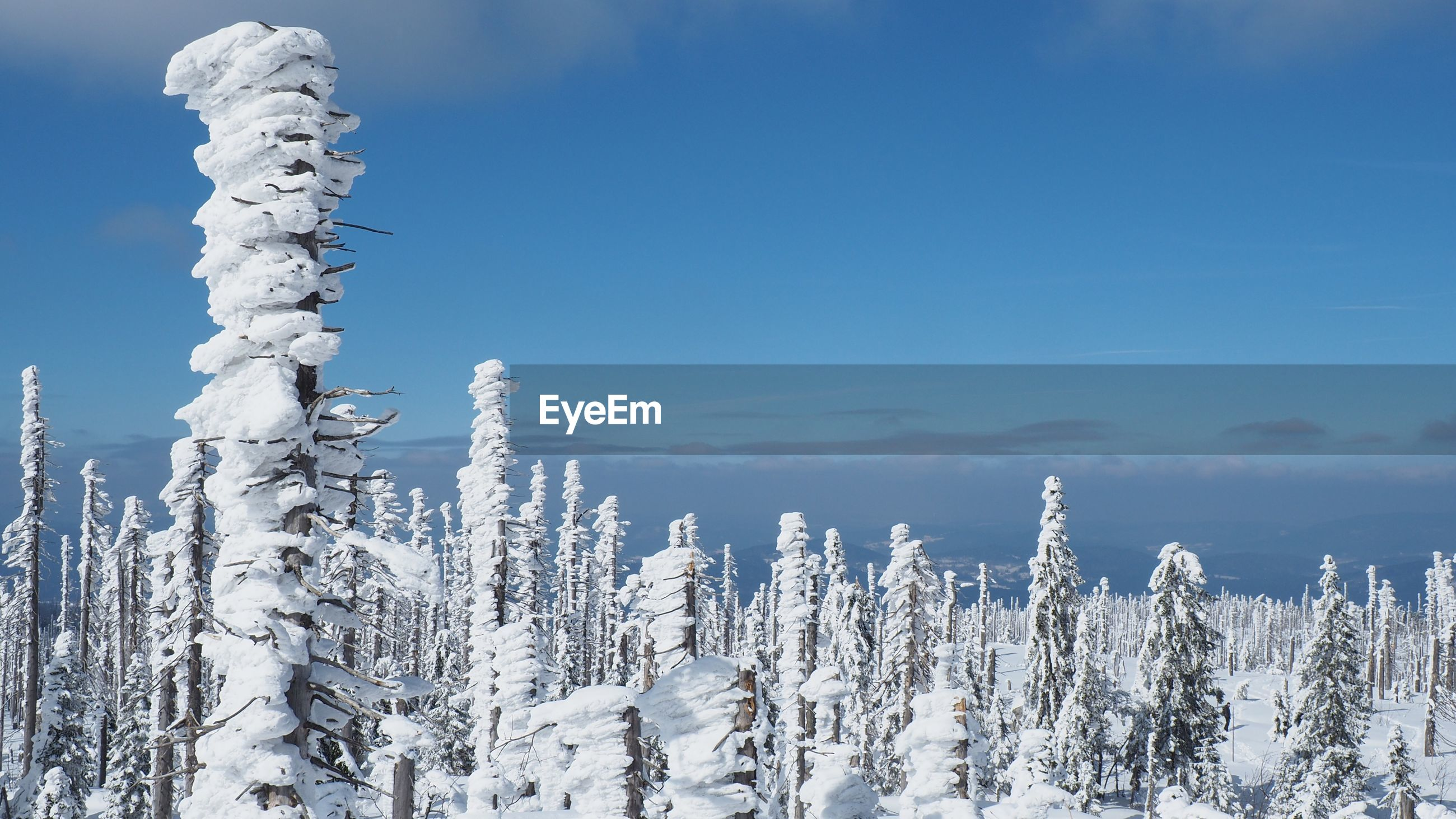Snow covered trees against sky in forest