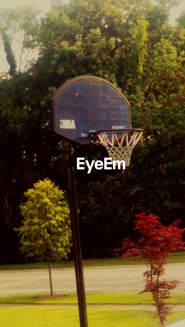 basketball hoop, tree, basketball - sport, basketball, sport, court, growth, day, park - man made space, outdoors, no people, nature, grass