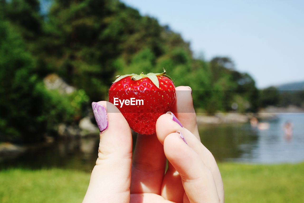 human hand, healthy eating, fruit, hand, focus on foreground, food, holding, human body part, food and drink, one person, red, wellbeing, freshness, real people, strawberry, day, berry fruit, unrecognizable person, body part, close-up, finger, outdoors, human limb