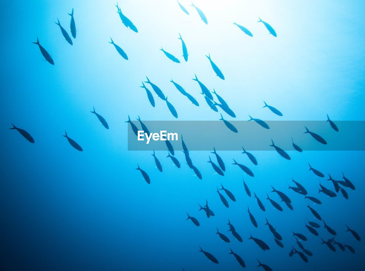 LOW ANGLE VIEW OF FISH IN SEA