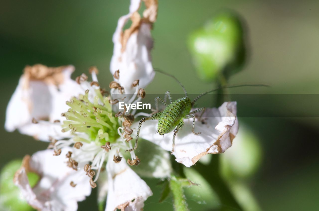 plant, beauty in nature, growth, close-up, flower, flowering plant, vulnerability, fragility, insect, freshness, focus on foreground, invertebrate, animals in the wild, animal themes, selective focus, animal wildlife, no people, animal, nature, day, flower head, outdoors, pollen, pollination