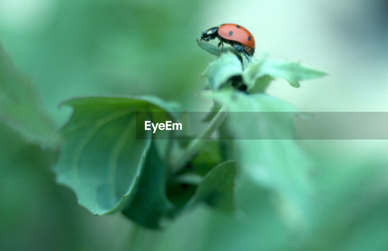 one animal, animal themes, plant, invertebrate, animals in the wild, insect, animal, animal wildlife, green color, close-up, plant part, leaf, selective focus, no people, nature, growth, beauty in nature, day, vulnerability, fragility, outdoors