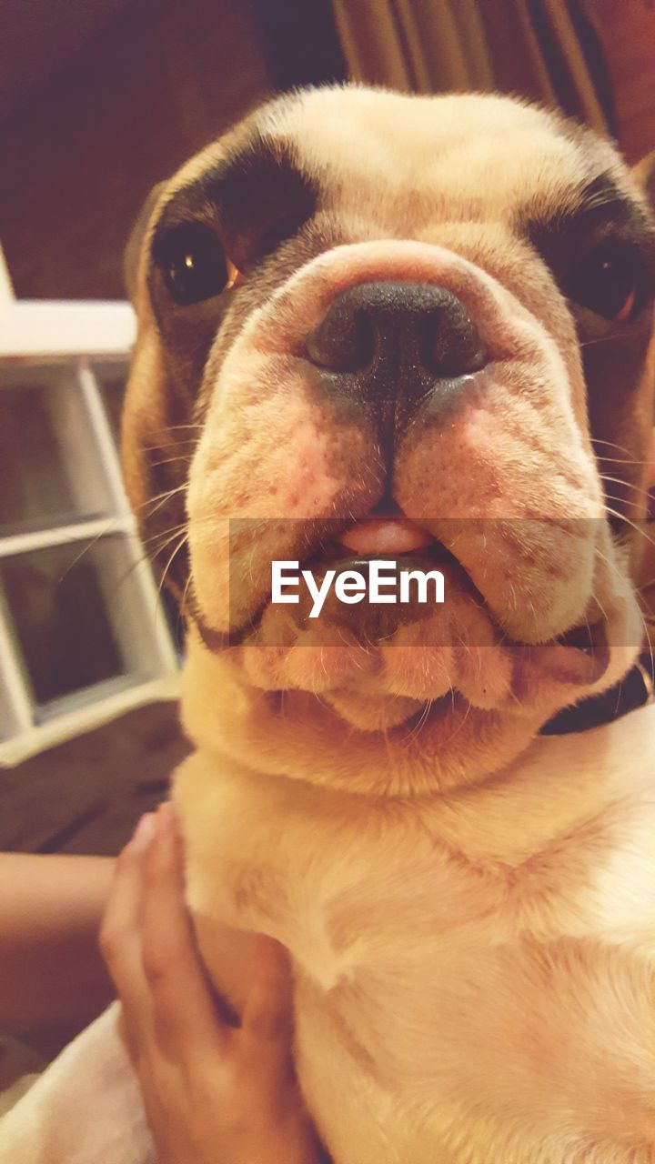pets, one animal, dog, mammal, domestic animals, animal themes, close-up, indoors, no people, day