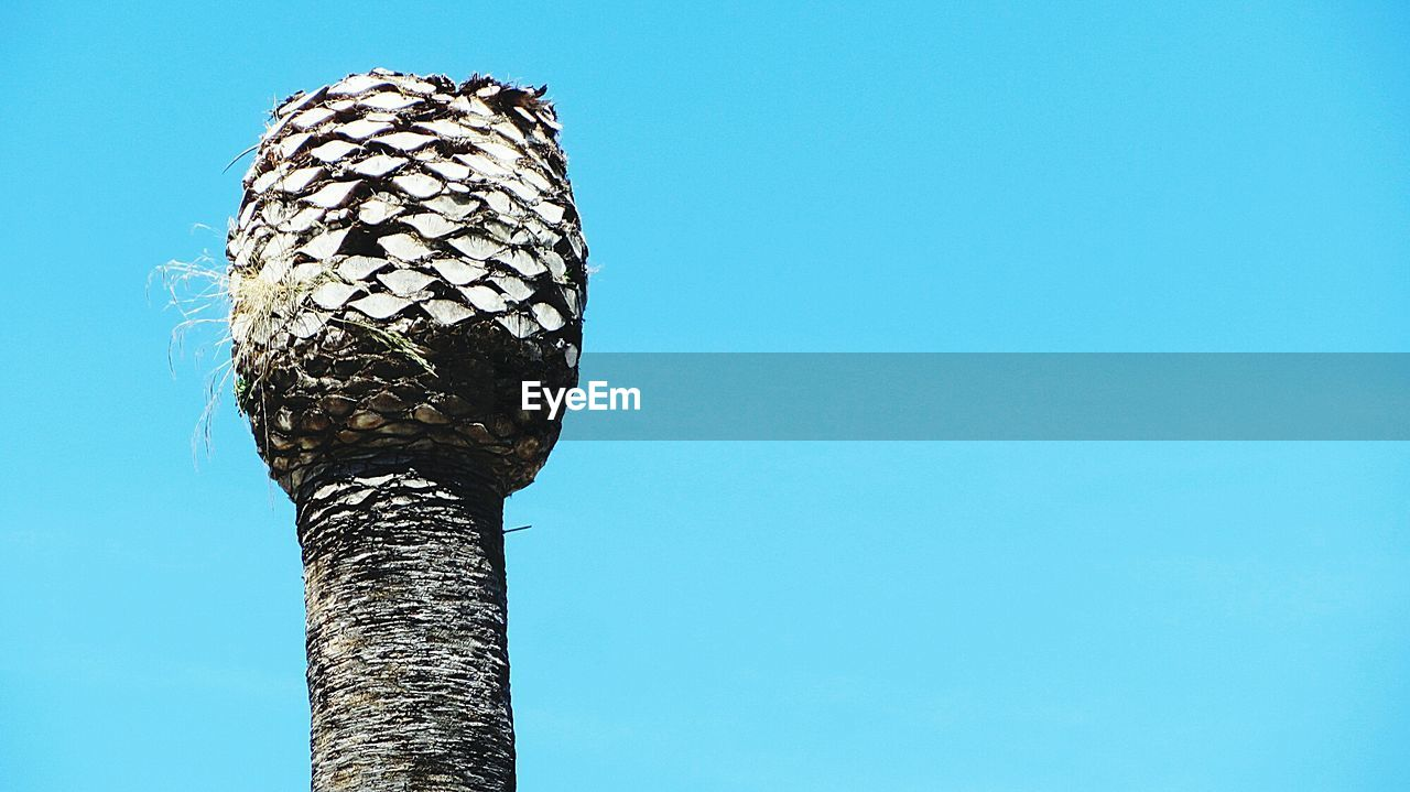 copy space, clear sky, blue, no people, day, animals in the wild, outdoors, one animal, low angle view, animal themes, bird, nature, perching, close-up