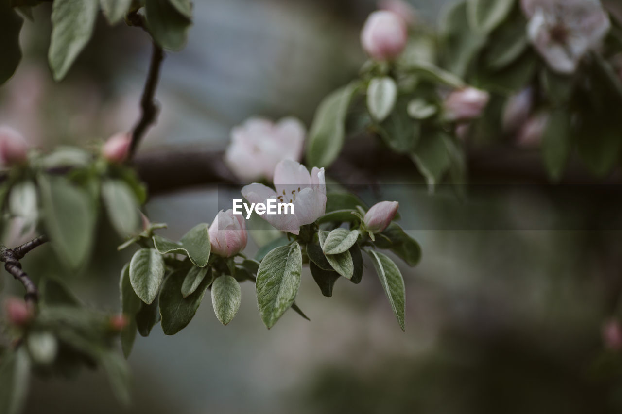 plant, growth, flower, beauty in nature, flowering plant, vulnerability, freshness, close-up, fragility, plant part, leaf, petal, focus on foreground, nature, selective focus, bud, day, no people, flower head, inflorescence, outdoors, springtime